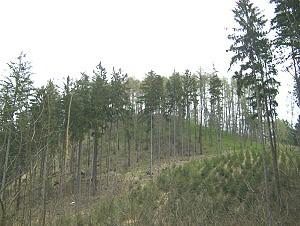 Návrší bývalého hradz Rychvald