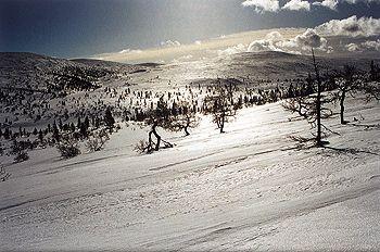 http://www.treking.cz/treky/laponsko.jpg
