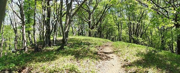 Les, hřeben Zárub