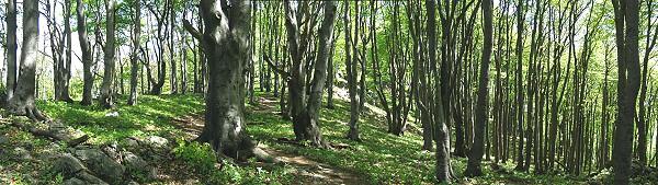 Dominují bukové lesy